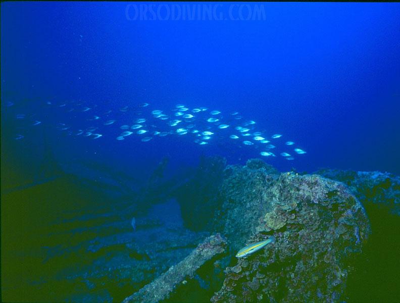 clan-olg,con-passaggio-pesci